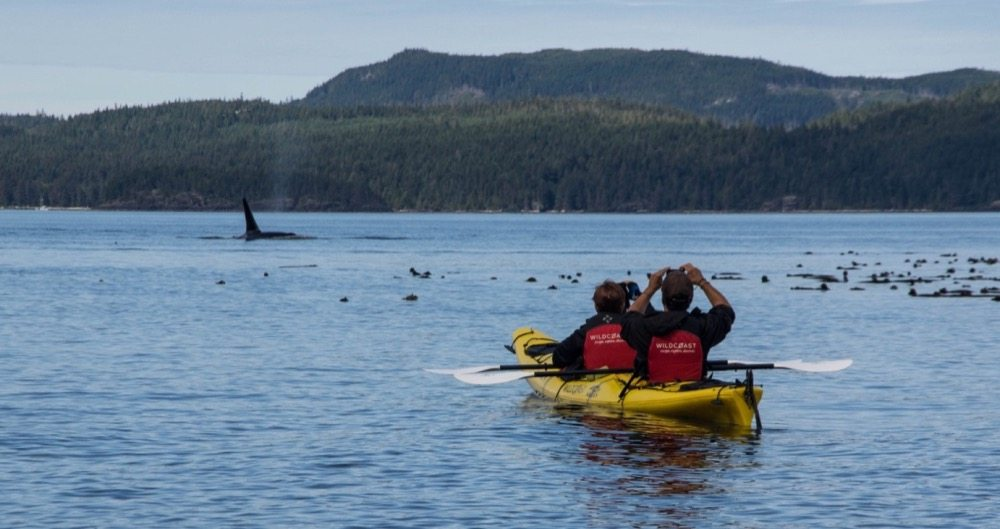 WildCoast Kayak Tours & Vacations