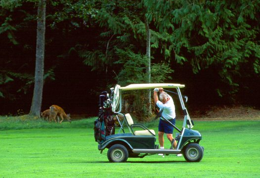 Golfing among furry friends. Credit: Storey Creek Golf Course
