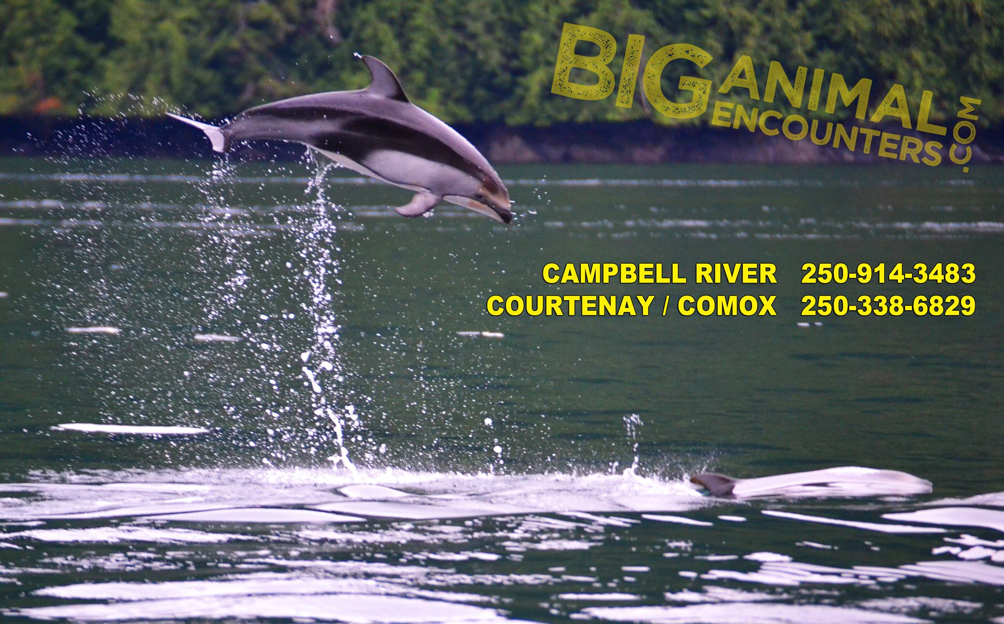 Big Animal Encounters by Pacific Pro Dive & Marine Adventures