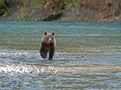 Campbell River: Your Destination for Salmon Fishing and Bear Watching