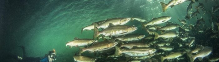 Exploring the Depths of the Campbell River